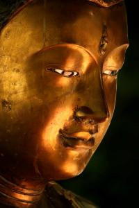 goldenbud