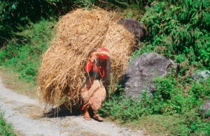 Napalese-woman-carrying-heavy-load (1)