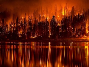 forest-fire-991479_640