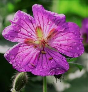 blossom-3414403_960_720
